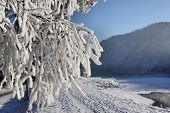 Winter landscape. Trees with snow and hoarfrost
