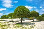 Decorative shaped trees on the beach on Koh Phangan island, Thailand