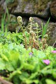 Spring symbol, young fern