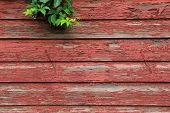 Green leaves hanging over worn barn boards
