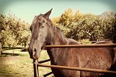 Closeup of a farm horse in his corral with an instagram retro look.