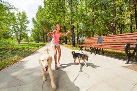 stock photo of girl walking away  - Teenage girl with two naughty dogs on a walk with pets running away off the leash - JPG