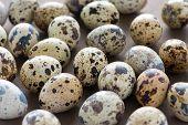 Closeup of quail eggs