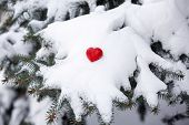 Fir tree branch covered with snow and heart, closeup view