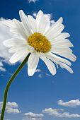 Flowers Macro On Blue Sky