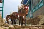 pic of caravan  - Donkey caravan in mountains in the village - JPG