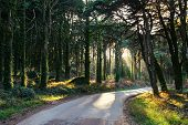 image of ivy  - Road in the green wood in Portugal - JPG