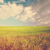 beautiful sky and summer fields, retro film filtered, instagram style