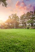 Grassland and trees in sunset