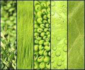 Green color samples collage