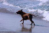 Cachorro correndo na praia