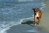 Cachorro correndo na praia de Puerto Escondido,