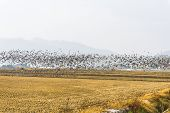 Republic of Korea Migratory Birds