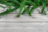 Pine On Wood Background