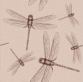 picture of dragonflies  - Vector illustration of dragonfly on vintage background - JPG