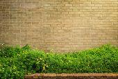 image of lantana  - background and texture of vintage style decorative brown brick wall with Lantana camara or Cloth of gold - JPG
