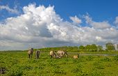 picture of herd horses  - Herd of horses in nature under a blue cloudy sky in spring - JPG
