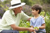 pic of grandfather  - Grandfather And Grandson Working In Vegetable Garden - JPG