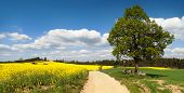 stock photo of crucifix  - way between rapeseed field and lime tree with crucifix - JPG