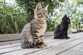 foto of stare  - Two cats on a table staring at something - JPG