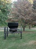 Carriage In Fall