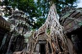 Ta Prohm temple also known as the Tomb Raider temple in the Angkor complex, Cambodia