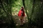 Little Red Riding Hood in the wood