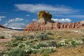 Plume Rocks Wildflowers