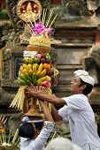 BALI - JANUARY 14: Village woman loads the offering of food basket on her head in a procession to th