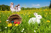 pic of easter eggs bunny  - Easter bunny on a beautiful spring meadow with dandelions in front of a basket with Easter eggs - JPG