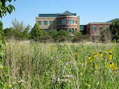 Prarie Wildflower and Grass Setting with Beautiful Modern Day Office Building of Prarie Center