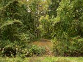 Vanishing Trail