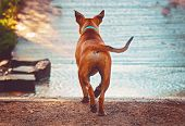 Beautiful photo of a dog playing outside running toward water toned with a retro vintage instagram m poster