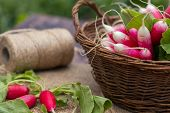 Bunch Of Fresh Radishes In A Wooden Box Outdoors On The Table. Bunch Of Fresh Radishes In A Wooden B poster