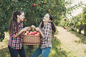 Girls With Apple In The Apple Orchard poster