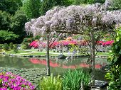Japanese Garden And Wisteria Arbor