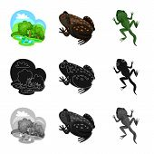 Vector Illustration Of Wildlife And Bog Logo. Collection Of Wildlife And Reptile Stock Symbol For We poster