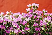 Bunch of Pink Flowers