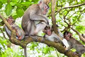 Sacred monkey Forest in Ubud, Bali, Indonesia.