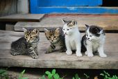 Постер, плакат: Четыре Веселые котята