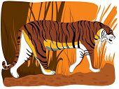 Постер, плакат: Векторные иллюстрации шаржа тигра