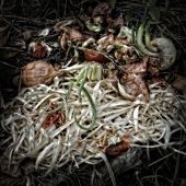 Asparagus Peelings on a Compost Heap