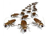 stock photo of cockroach  - An army of cockroaches  - JPG