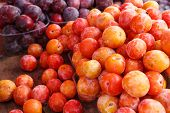 Multicolored plums with natural wax bloom