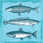 stock photo of freshwater fish  - Set Of Fishes Vintage Style Vector Illustration - JPG