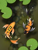 Two butterfly koi fish