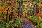 Trail through bright colorful trees