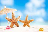 starfish  with ocean , beach and seascape, shallow dof