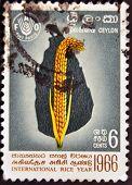 Ceylon - Circa 1966: A Stamp Printed In Ceylon Dedicated To International Rice Year, Circa 1966