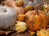 Pumpkins In The Autumn